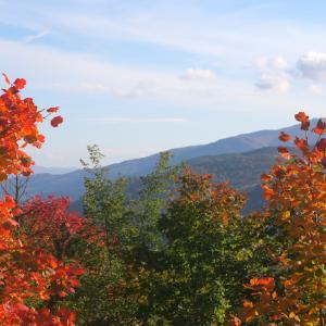 燃えるようなカエデみごとな紅葉の森、カゼンティーノ国立公園