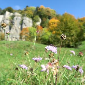 紅葉にキノコにょきにょき秋色の山、ラヴェルナ