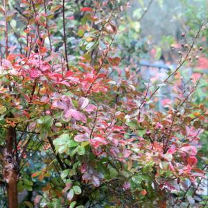 色づき濡れる秋の庭・月と久しぶりの美容院