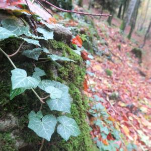 秋色の森の緑のハートと古代ギリシャ・エトルリア芸術