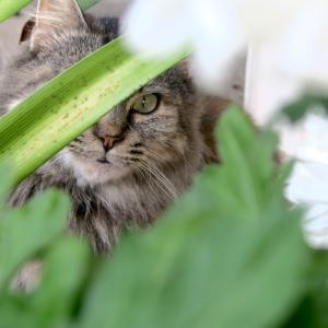 菊とネコと逃走ウサギ