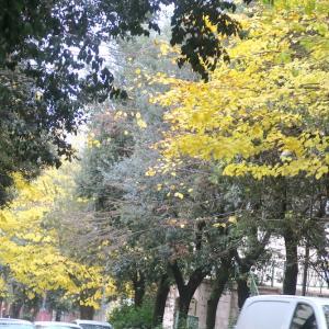 黄葉の秋日本から小包到着、化粧 無事税関突破