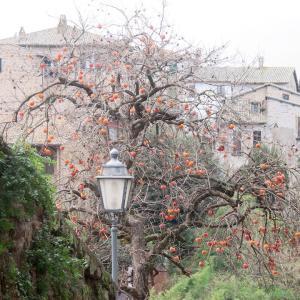 柿彩るオルヴィエートと大聖堂