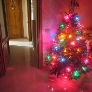 クリスマスツリーと猫と夕焼けの町