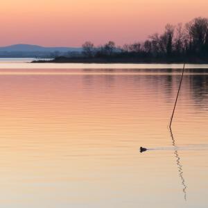 夕焼けの湖の鳥とコーヒーの鳥