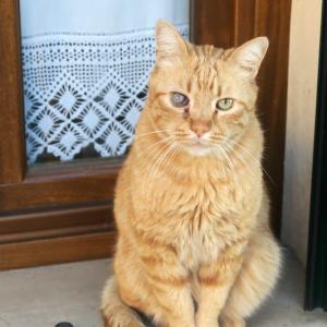 旅先の猫と風景を猫の日なので、イタリアは2月17日