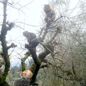 にんにん忍猫木登りの術、今日は猫の日 忍者の日