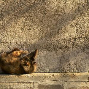 猫と瞑想 外出禁止と夫婦仲 感染情報とのつきあい方