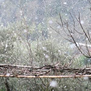 梨すもも花に雪降る春のペルージャ