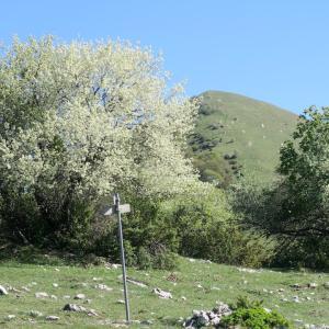 木も空も花いっぱいのフィオンキ山、スポレート