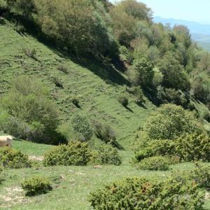 牛たちに見つめられ昼食フィオンキ山、スポレート