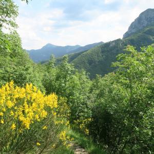 川沿いに花の道ゆけば山と修道院、クッコ山