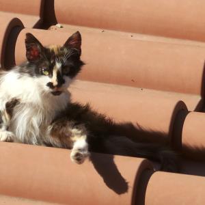 朝は屋根でおはよう猫と白い半月