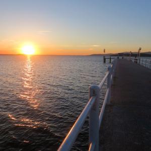 夕どきの子連れカンムリカイツブリ、トラジメーノ湖