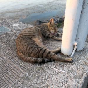 猛暑に猫のびる夏の夕暮れ、トラジメーノ湖