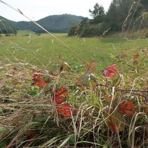 秋色の実と花彩る高原さんぽ