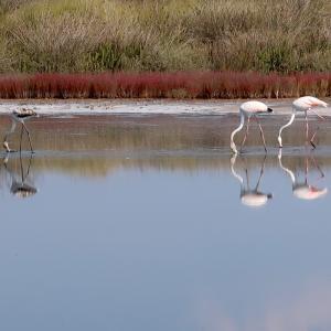 フラミンゴ水鏡きれいチルチェーオ国立公園、ラッツィオ