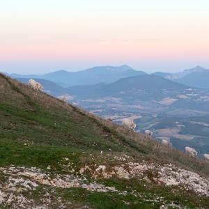 夕焼けに牛立ち並ぶクッコ山、日曜はさらなるオレンジ・レッドゾーン