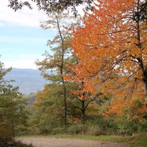 紅葉もきれい栗拾った森カゼンティーノ、トスカーナ