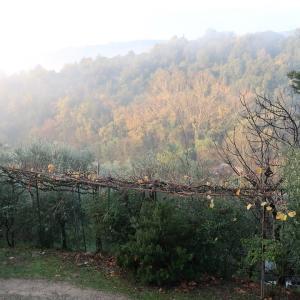 霧の秋夕空とカボチャ入りクリームシチュー