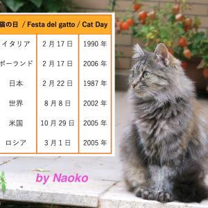 イタリアの猫の日が2月17日になった理由