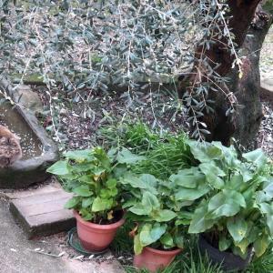 庭に遊ぶ猫たち今日はイタリア猫の日
