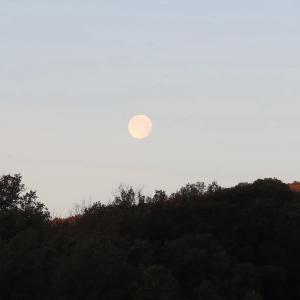 あかつきの月と祝福のオリーブの枝