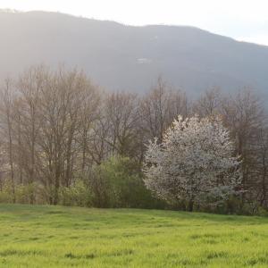 桜・夕日やさしく彩る古城への道