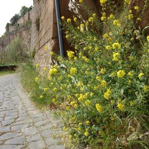 花彩り緑優しいオルヴィエート