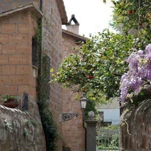 藤・椿 壁の花もきれいオルヴィエート