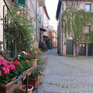 花きれい猫いこうオルヴィエート風情ある村