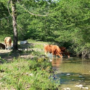 清らかな川を越え遡れば牛・花・緑