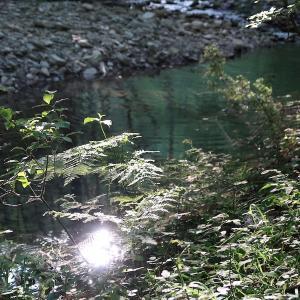 緑深く川美しい森で牛と向き合う、トスカーナ