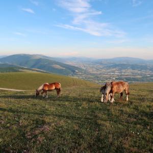 花いっぱい馬が草食むクッコ山