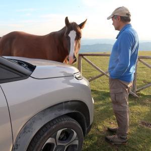 馬がつかず離れずなめた夫の車、恋か自己愛か食いしん坊か