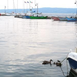 若きモンタルバーノとリーヴィア、ミミとの出会い、ボルセーナ湖 マガモの親子の写真を添えて