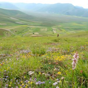 花彩る山の下方にカステッルッチョ高原は今は黄の花みどり色