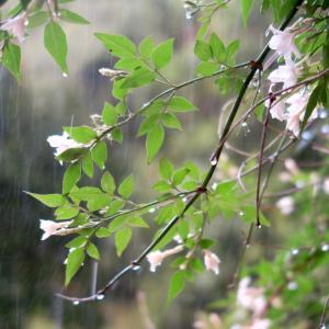 イタリア語学習メルマガ 第8号⑴ 「天気のイタリア語、イタリアの天気予報サイトの使い方」