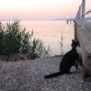 猫かわいい夕焼けの湖と歯医者はつらいよ