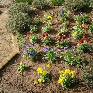 パンジー、ビオラ、花壇にも植えました!