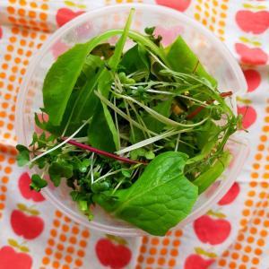 【月曜断食・2週目】6/10㈬蒸し鶏と野菜いっぱいサラダ弁当