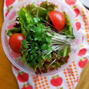 【月曜断食・4週目】(金)蒸し鶏の和風サラダ弁当