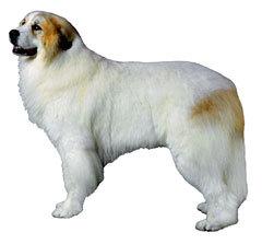 大型犬ですが・・・