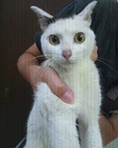 猫・クロアチャン、里親&寄付のお願い