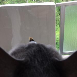 窓の外側の蛾