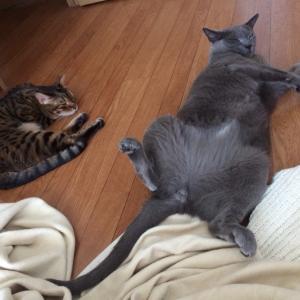 世界猫の日らしいよ