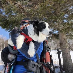 200301わんことスキー!ももちと県内遠征~^^