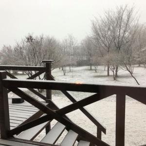 4月の雪!それもこんなに~!!!モモチ大喜び♬