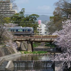 夙川・桜_2021年4月