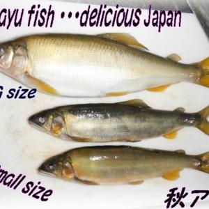 秋だけの川の女王子持ちアユちゃん・🐟・絶品アユ、川の小さな小さな宝石腹・・・!sweetfish  delicious Japan